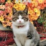 おすすめ絵本『ネコと歩けば』岩合光昭 (辰巳出版)