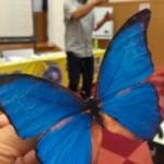 ものづくり「ふわふわチョウ」づくり|たのしい教育体験講座