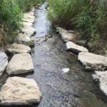 たのしい環境教育|北部の「とりハダ」ポイント-とりハダ活動報告2015.10某日(2)