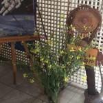 菜の花とたのチャン と「楽しい授業」