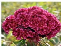 板倉聖宣の発想法「花」