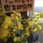 たのしい植物紹介|ハニーエンジェルとオンシジューム
