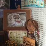 春本番のウェルカムステージ|貴重なボタニカルアート