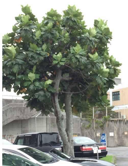 自由研究ナメクジの木