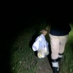 沖縄でクワガタムシ捕り 夜にトラップを仕掛けにと
