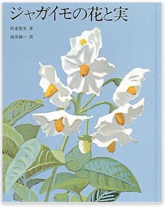 板倉聖宣 ジャガイモの花と実