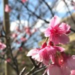 さくら咲く -自然をたのしむ-