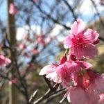 春の形を探しましょう 季節をたのしく味わう!