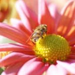 花と親しむシリーズ 虫媒花と風媒花のお話