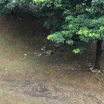 自由研究 自然に親しむシリーズ カスミヒメハギ(コバナヒメハギ)と親しむ