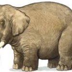 問題:象の重さをはかる 親子で考えてみませんか