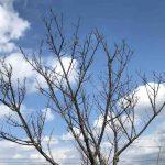 日本一早い桜祭りより早い桜祭り開催/たのしい教育の春①