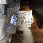 自由研究 ネコのおもちゃ