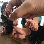 カブトムシも水を飲むんですか?/子ども達からの質問に答えて-自由研究-